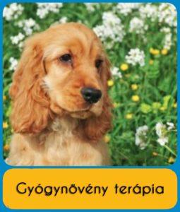 gyogynoveny - kutyaterapia.hu