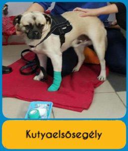 kutyaelsosegely - kutyaterapia.hu