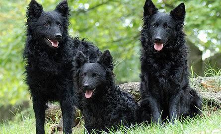 mudi- kutyaterapia.hu