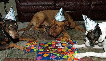 - kutyaterapia.hu