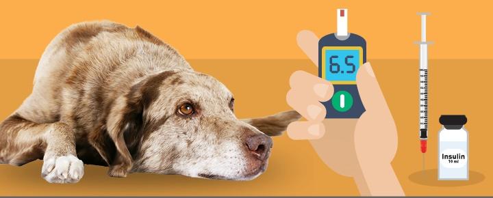 kutyaterapia - diabetes
