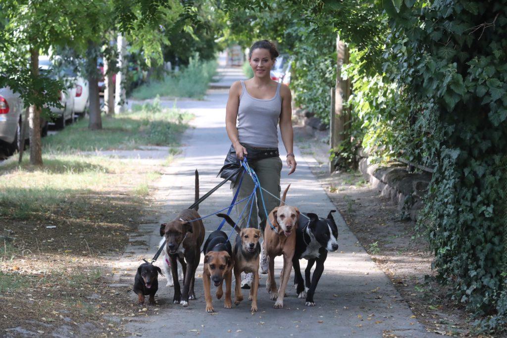 kutyaterapia - tornoczyanita