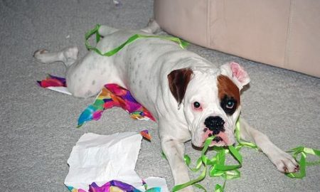 kutyaterapia.hu - vizonto kutya