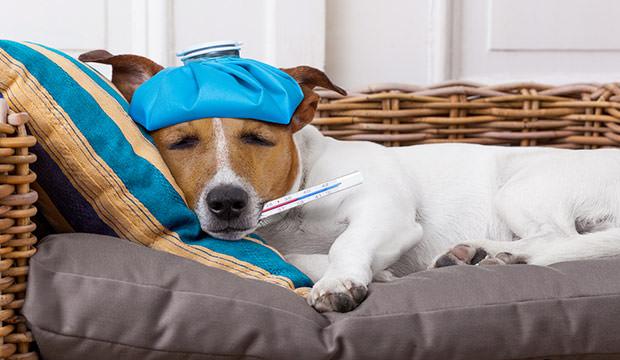 kutyaterapia.hu